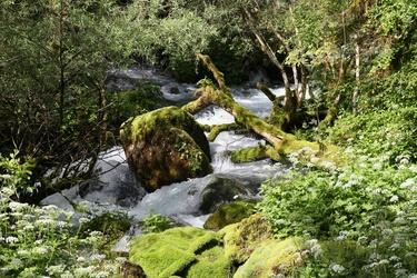 Šunik creek